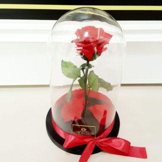 Trandafiri criogenati/nemuritori